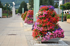 Summer street decoration of the city - pyramid made from particoloured flowers Stock Images