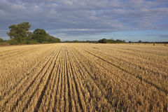 Summer stubble field Royalty Free Stock Photos