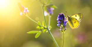 Summer, summertime background - butterfly sitting on a flower Royalty Free Stock Image