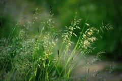 Bent plants in summer sun Stock Photo