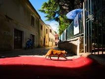 Summer. The sun. Cat. Croatia. Bright sun on the streets of Poreč. Croatia. Cat on the carpet royalty free stock photography
