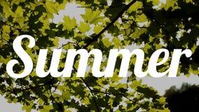 Summer sun stock video