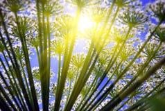 Summer sun through flower. Illustration of summer sun through flower stems Royalty Free Stock Image