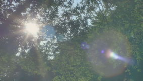 Summer Sun Lens Flare Green Leaves Park Trees stock video footage