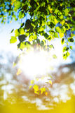 Summer Sun Shining Through Forest Trees Royalty Free Stock Photo