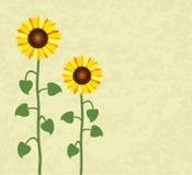 Vector summer sunflower Stock Photography