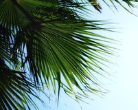 summer sunlight sky leaf green color nature leaf beauty close-up palm tree Stock Photo