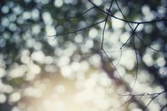 Summer sunlight under the tress. Beautiful Bokeh under the tress royalty free stock photos