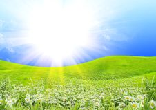 Summer sunny day Stock Image