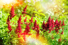 Summer sunny day background with wild herbs and flowers Stock Photos