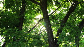 Summer sunny day in the forest, green trees, light stock video footage