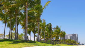 Summer sunny day miami downtown palm park traffic panorama 4k usa. Usa summer sunny day miami downtown palm park traffic panorama 4k stock footage