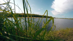 Summer sunny day on river. Nature background. 4K. Ultra HD stock footage