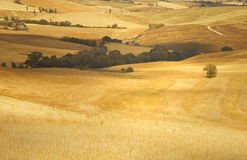 Summer sunny golden colored barley landscape Stock Image