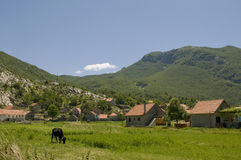 Summer sunny landscape with cow Royalty Free Stock Image