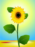 Summer sunny landscape with a sunflower. Royalty Free Stock Images