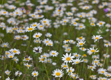 Summer sunny meadow Royalty Free Stock Images