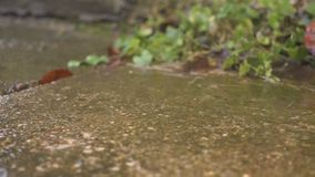 Summer sunny rain. Drops fall from the roof, slow motion. Hd stock footage