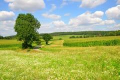 Summer sunny rural landscape Stock Images