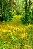 Summer Sunny Russian Forest Glade Stock Photography