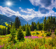 Summer sunny scene in the valley of Speicher Durlassboden lake Royalty Free Stock Photos