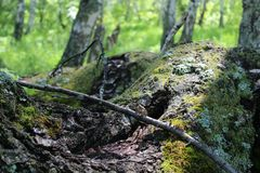Sunray on gray bark. Summer sunray on gray moss bark stock photo