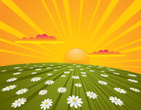 Summer Sunrise. Beautiful summer sunrise over daisies field. EPS8 CMYK vector illustration included with global colors Stock Images