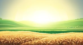 Summer sunrise landscape with field of wheat. Summer landscape with a field of ripe wheat, and hills and dales in the background. Raster illustration Stock Image