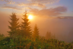 Summer sunrise in the mountains. Stock Image