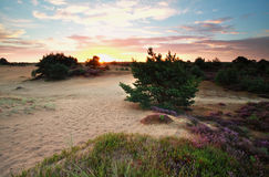 Summer sunrise over dunes with wildflowers Stock Photography