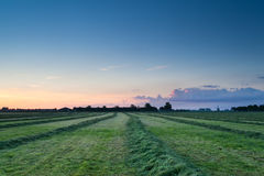Summer sunrise over fresh hay on pasture Royalty Free Stock Images