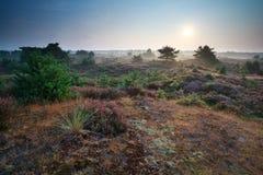 Summer sunrise over heather dunes Stock Photography