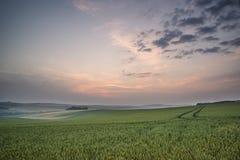 Summer sunrise over landscape of fresh wheat field Stock Photos