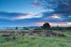 Summer sunrise over marshes with heather Stock Photography
