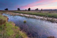 Summer sunrise over swamp Stock Photography