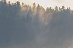 Summer sunrise Royalty Free Stock Images