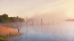 Summer sunrise in the swamp. Misty morning sunrise on the swamp stock video footage