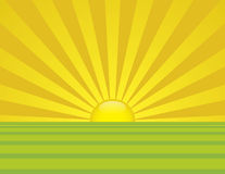 Summer Sunrise. Summer time sunrise with bright yellow and green fields of grass vector illustration