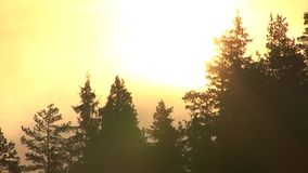 Summer sunrise Time lapse with drifting mist and clouds in the mountain. Over pine forest stock video