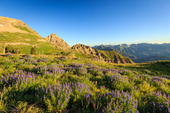 Summer sunrise in the Wasatch Mountains. Stock Images