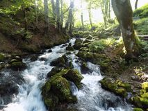 Summer suns whose rays fall on a mountain river. Ice, clean water cools the hot summer air. Forest as a shield preserves the beauty of nature somewhere in Stock Images