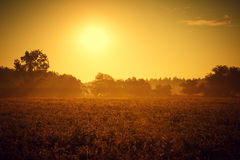 Summer sunset. Beautiful landscape scenery at sunset Stock Photo