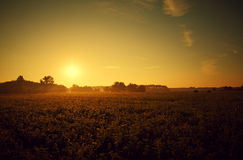 Summer sunset. Beautiful landscape scenery at sunset Royalty Free Stock Image