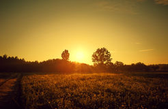 Summer sunset. Beautiful landscape scenery at sunset Royalty Free Stock Photography