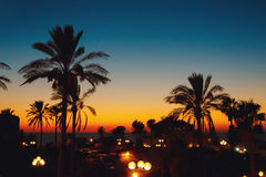 Summer sunset at a coastline with palm tree Stock Images