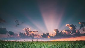 Summer sunset evening above countryside rural wheat field landscape. Scenic dramatic sky with rain clouds on horizon. Summer rainy sunset evening above stock video footage