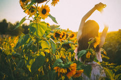 Summer sunset. Girl at sunset in a field of sunflowers Royalty Free Stock Images
