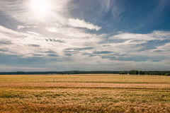 Summer sunset at golden field landscape, gorgeous nature, German Stock Photography