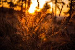 Summer Sunset Meadow Stock Photography