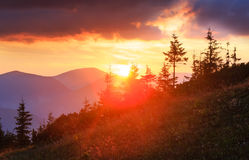 Summer sunset mountain view Carpathian, Ukraine. Royalty Free Stock Photo